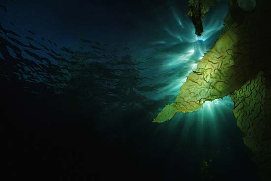 kelp_light - Bruce Hall ©2010